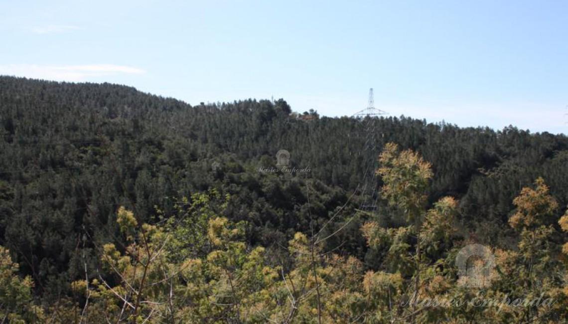 Bosque que rodean la propiedad